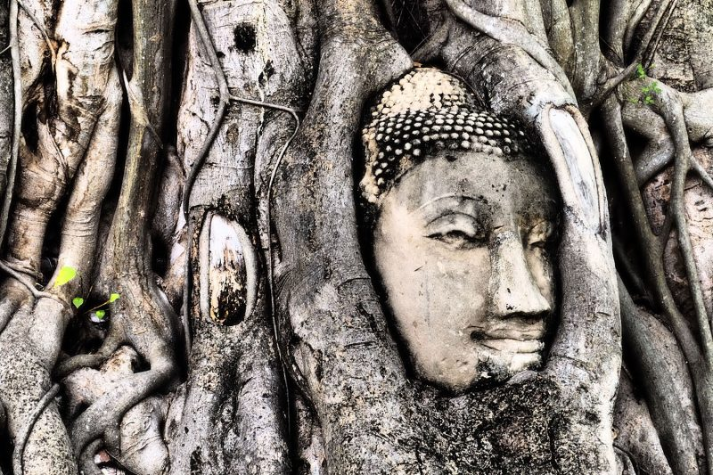 Buddha Head In Tree, Ayutthaya